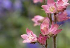 różowią małe kwiatki Obrazy Stock