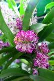 różowią małe kwiatki obraz stock