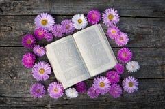 Różowi astery zdjęcie stock