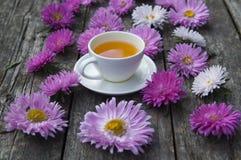 Różowi astery fotografia royalty free