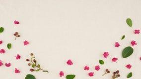 Różowi crape mirtu płatki, liście i okulizowanie kwiaty, zdjęcie stock