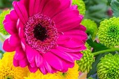 Różowi Gerbera kwiaciarni kwiaty, zamykają up pionowo Obrazy Royalty Free