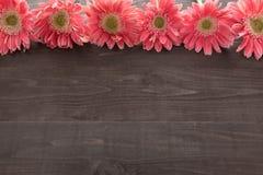 Różowi gerbera kwiaty są na drewnianym tle Obraz Stock