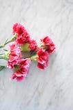 Różowi goździki na wykładają marmurem stół obraz royalty free