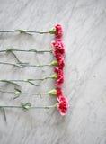 Różowi goździki na wykładają marmurem stół zdjęcie royalty free