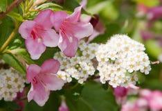 Różowi i biały kwiaty obraz stock