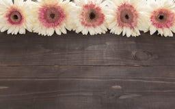 Różowi i biali gerbera kwiaty są w drewnianym tle Fotografia Stock