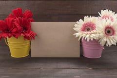 Różowi i czerwoni gerbera kwiaty są w flowerpots na woode, Obraz Stock