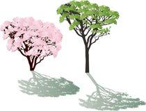 Różowi i zieleni ulistnień drzewa z cieniami Zdjęcia Royalty Free