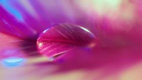 Różowi kroplę Obraz Stock