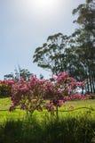 Różowi kwiaty Obrazy Royalty Free