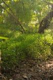 Różowi kwitnący bougainvilleas przeciw niebieskiemu niebu Zdjęcia Stock
