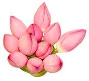 Różowi lotosowi kwiaty, wodna leluja, zakończenie up Fotografia Royalty Free