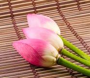 Różowi Nelumbo nucifera kwiaty, zamykają up, odizolowywający, drewniany tło, Obraz Stock
