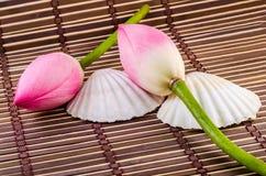 Różowi Nelumbo nucifera kwiaty, zamykają up, odizolowywający, drewniany tło, Obrazy Stock
