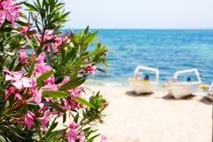 Różowi oleandrowi kwiaty, błękitny morze i łodzi lata tło, Obrazy Stock
