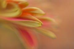 Różowi płatki Zdjęcia Stock