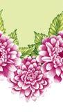 Różowi peonia kwiaty royalty ilustracja
