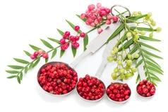 Różowi Peppercorns, świeży i suchy Zdjęcie Stock