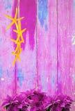 Różowi poinsecj boże narodzenia kwitną i rozgwiazda na różowym podławym modnym rocznika tle Obraz Stock