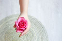 Różowi różanego w ręce obraz stock