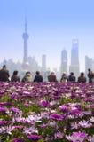 Różowi stokrotka kwiaty, ludzie ogląda Szanghaj linię horyzontu Fotografia Royalty Free