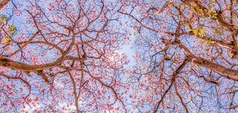 Różowi tubowi drzewa obraz royalty free