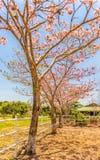 Różowi tubowi drzewa zdjęcie royalty free