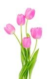 Różowi tulipanów kwiaty odizolowywający Zdjęcie Stock