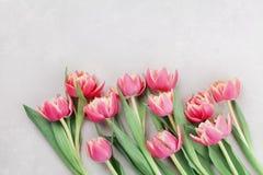 Różowi tulipanowi kwiaty dla wiosny tła odgórnego widoku w mieszkaniu kłaść styl Kartka z pozdrowieniami dla kobiety lub Macierzy Zdjęcie Stock