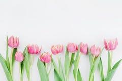 Różowi tulipanowi kwiaty dla wiosny tła odgórnego widoku w mieszkaniu kłaść styl z czystą przestrzenią dla teksta Powitanie dla k Zdjęcia Stock