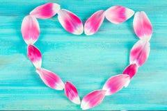 Różowi tulipanowi płatki w formie serca na błękitnym drewnianym tle zdjęcie royalty free