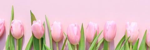Różowi tulipany na różowym tle Mieszkanie nieatutowy, odgórny widok valenti Fotografia Stock
