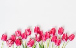 Różowi tulipany w rzędzie na białym tle Obrazy Stock