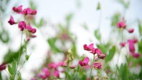 Różowi wildflowers w popióle zbiory