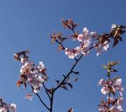 różowy fotografia stock
