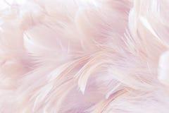 Różowy Abstrakcjonistyczny tło ptak, kurczaki i upierzamy teksturę, plama styl i miękkiego kolor sztuka projekt, fotografia stock