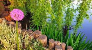 Różowy allium krajobraz zdjęcia royalty free