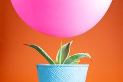 Różowy balonowy unosić się nad kaktusem Zdjęcia Stock