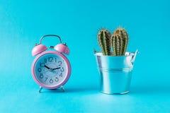 Różowy budzik z kaktusem na błękitnym tle Minimalny pojęcie obrazy royalty free