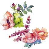 Różowy bukieta wildflower Kwiecisty botaniczny kwiat Dziki wiosna liścia wildflower odizolowywający Fotografia Stock