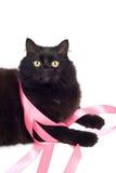różowy czarnego kota, grać wstążki Fotografia Stock