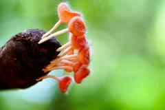 Różowy filiżanka grzyb r w dzikim zdjęcia royalty free