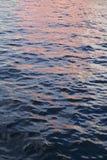 Różowy fiołek i błękitne wody Zdjęcia Royalty Free