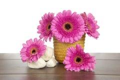 Różowy Gerbera w żółtych kosza i bielu kamieniach Fotografia Royalty Free