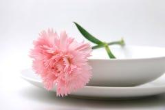 różowy goździk Fotografia Royalty Free