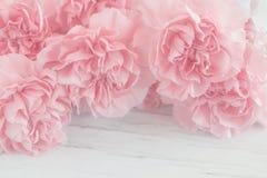 Różowy goździk Kwitnie bukiet Zdjęcia Stock
