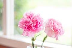 Różowy goździka kwiat dekorujący w domu Zdjęcia Stock