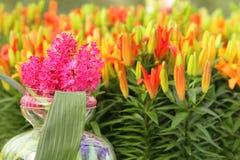 Różowy hiacynth zbliżenie Fotografia Stock
