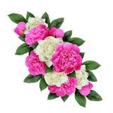 Różowy i biały peonia kwiatów przygotowania Obrazy Stock